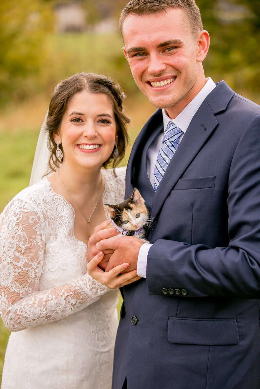 wedding kitten