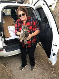 Wildlife rescuer helps great horned owl saved from Maria Fire
