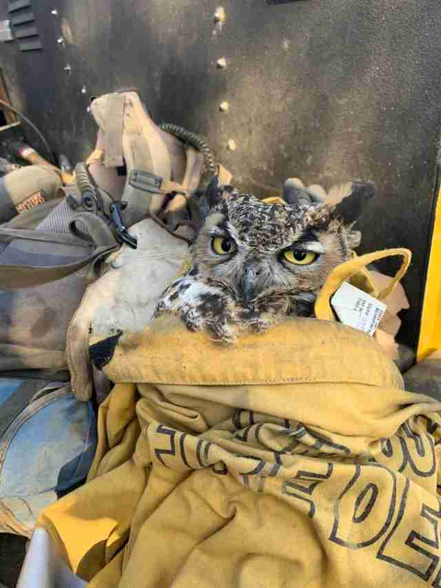 Owl saved from fire by California fire fighters