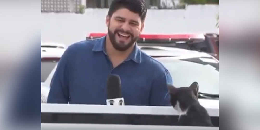 Reporter Can't Stop Laughing After Cat Interrupts News Segment