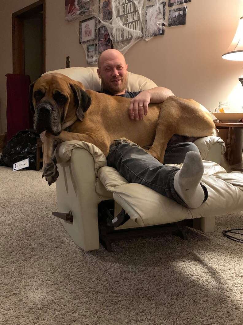 dog knocks over chair