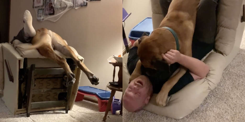 Dog Tries To Jump On Recliner With Dad — And It Doesn't Quite Go As Planned