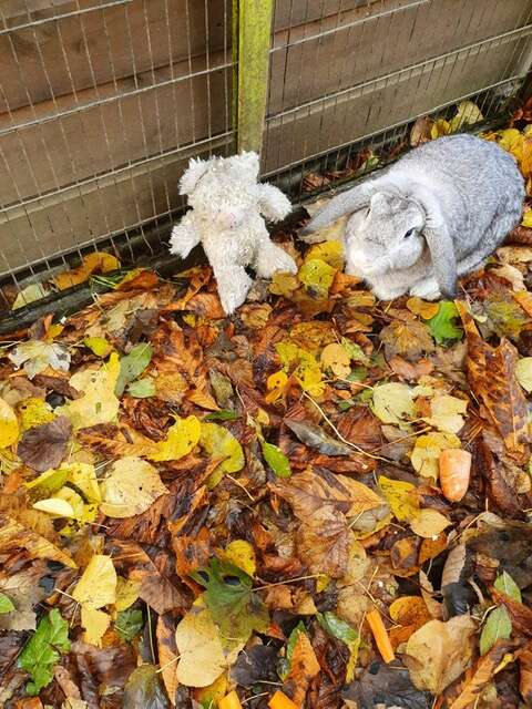 rabbit and his teddy bear