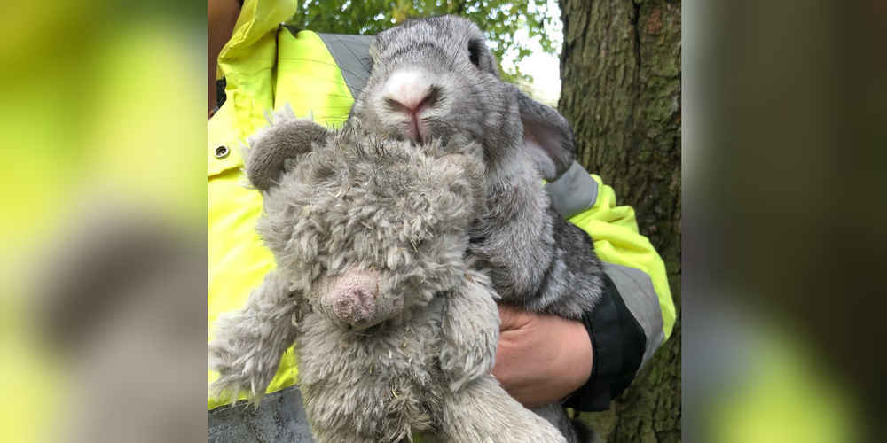 Scared Rabbit Abandoned In Box Clings To His Favorite Teddy Bear