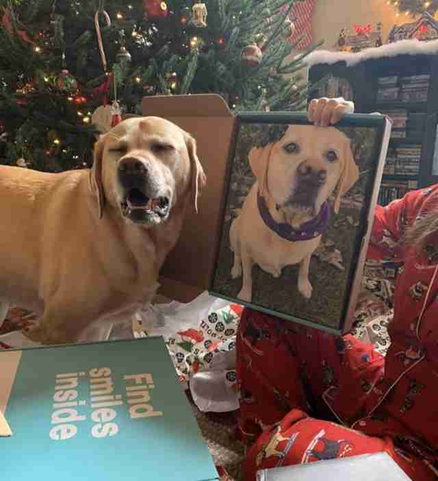dog loves photo of herself