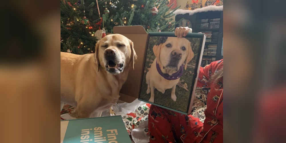 Dog Sees Photo Of Herself And Falls Completely In Love