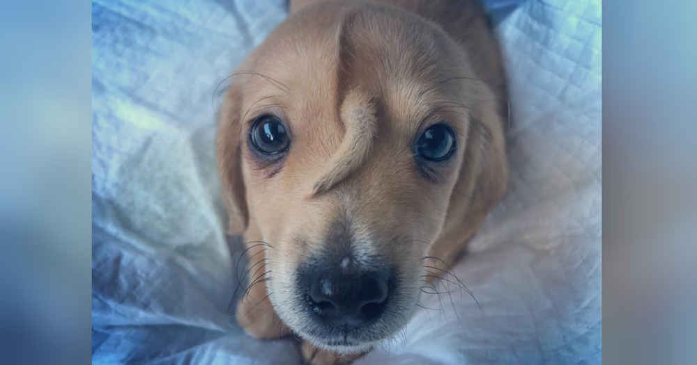Rescue Puppy Has The Cutest Extra Tail — On His Head