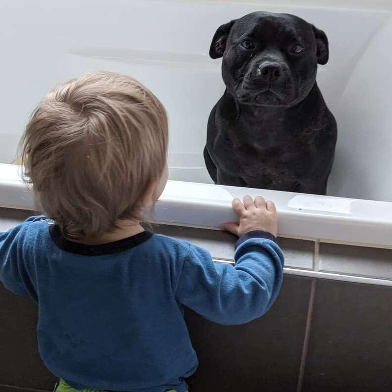 dog loves bath time