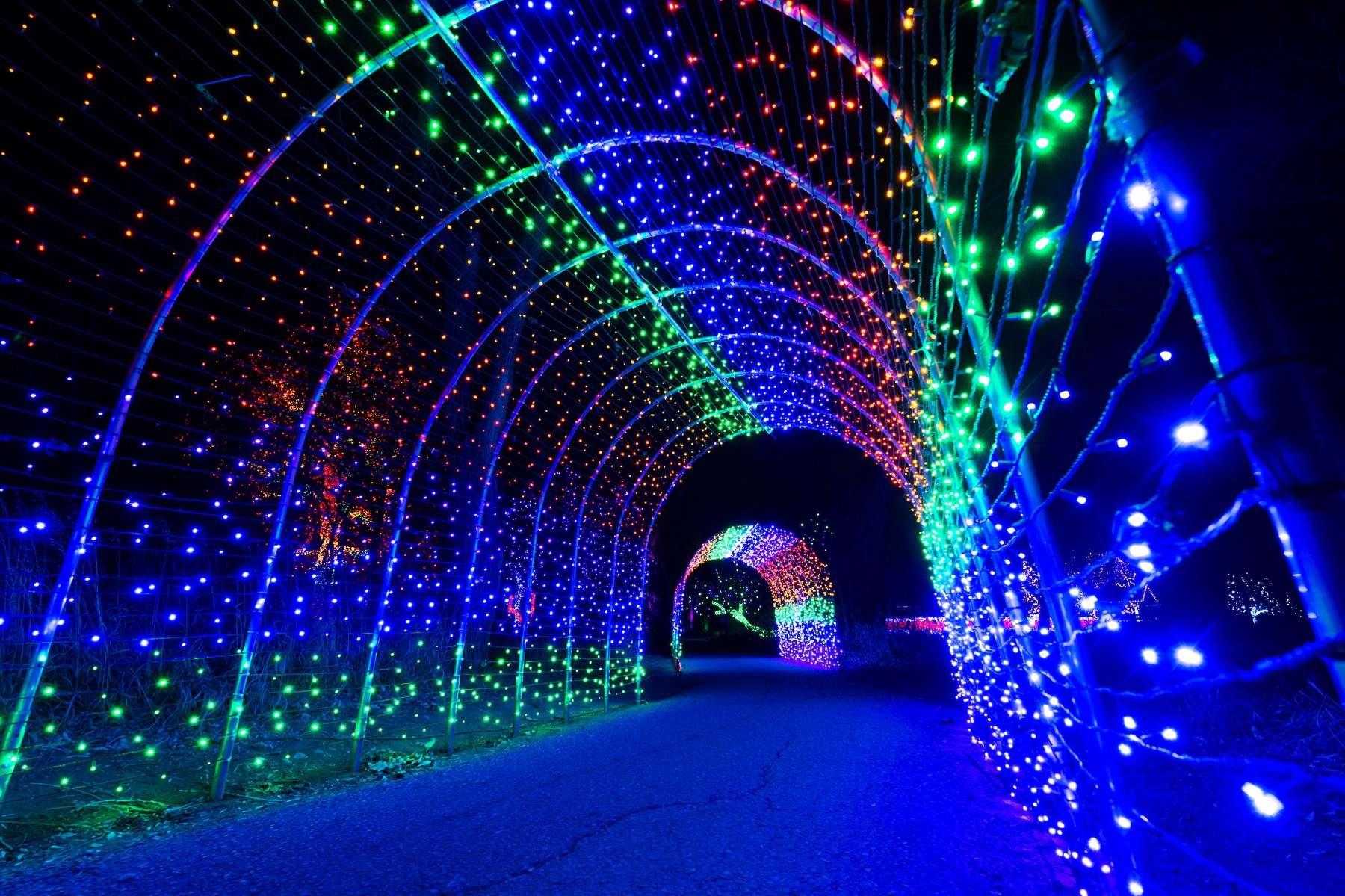 denver zoo lights 2020