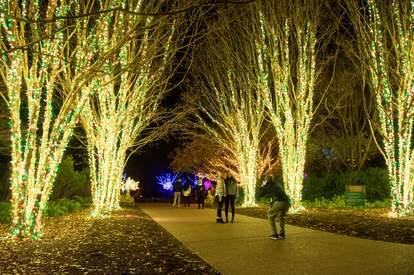 cheekwood lights