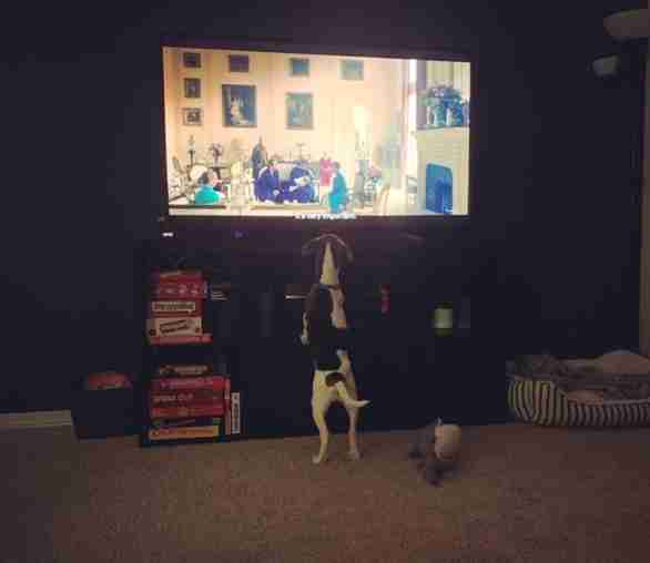 Luna the dog watches TV