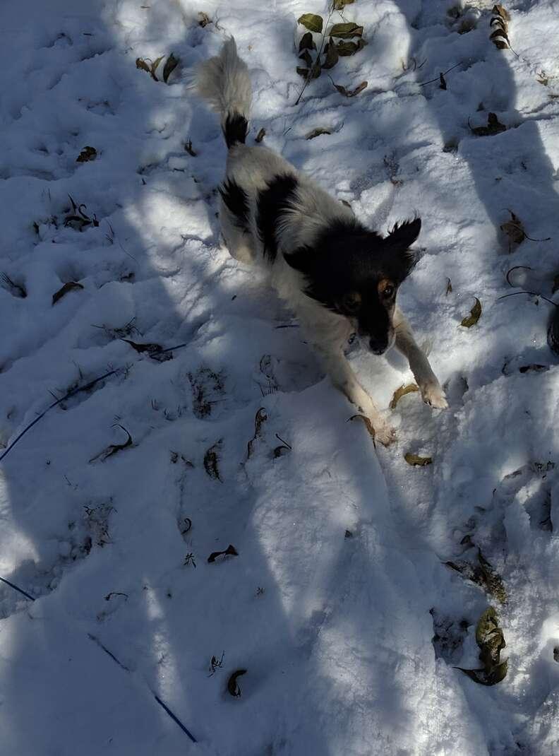 Dog runs through the snow to his rescuers