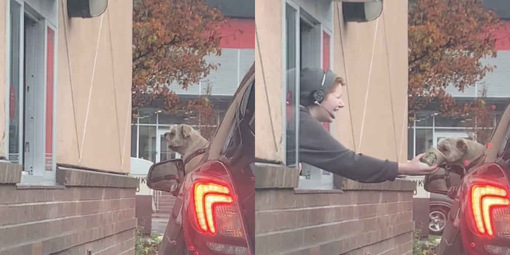 Dog At Drive-Through Starbucks Can Barely Wait For His Order