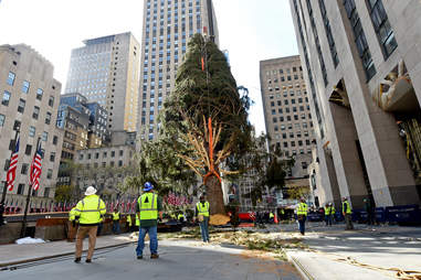 the 2019 rockefeller christmas tree