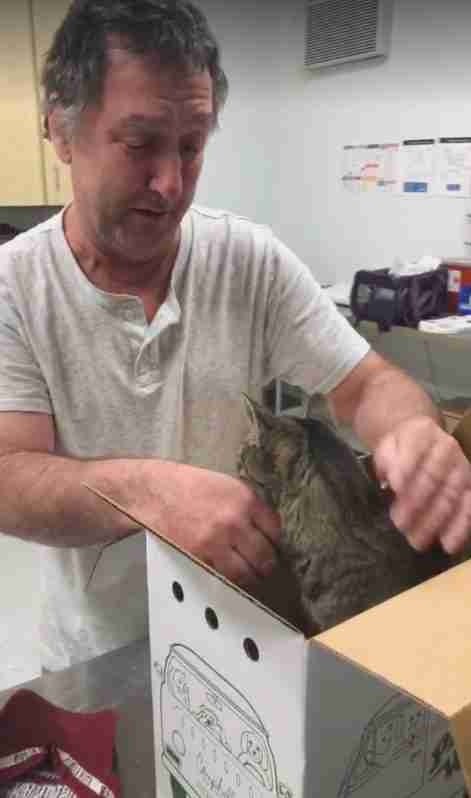 Man reunites with cat after 7 years