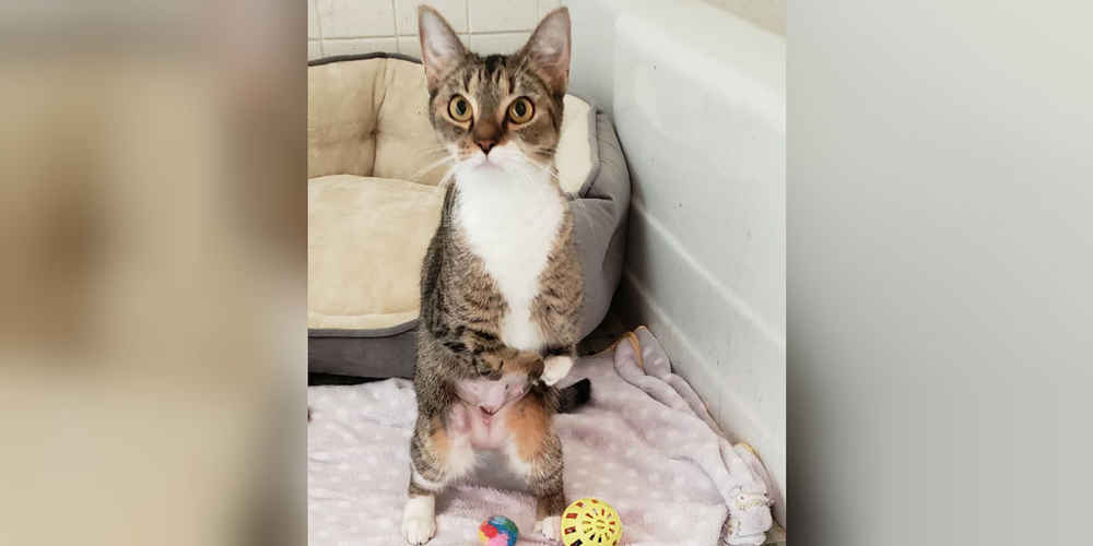 Cute Shelter Cat Teaches Herself To Stand Like A Human