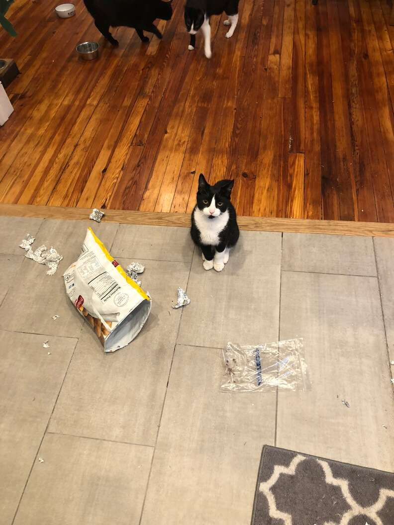 cat steals tortillas
