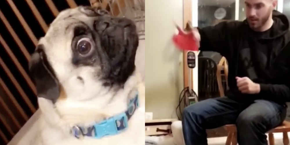 Dog Stares At Dad In Disbelief After Watching Him Do Magic Trick