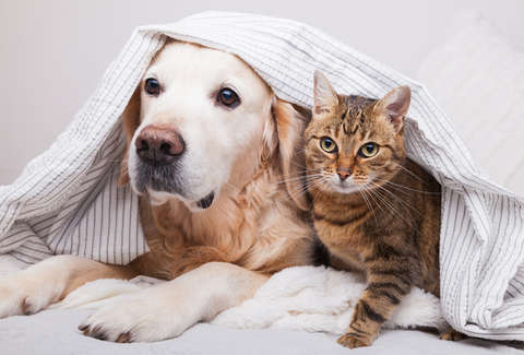 most popular dog and cat names pet name 2019 rover