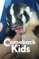 Comeback Kids cover art