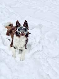 goggles dog