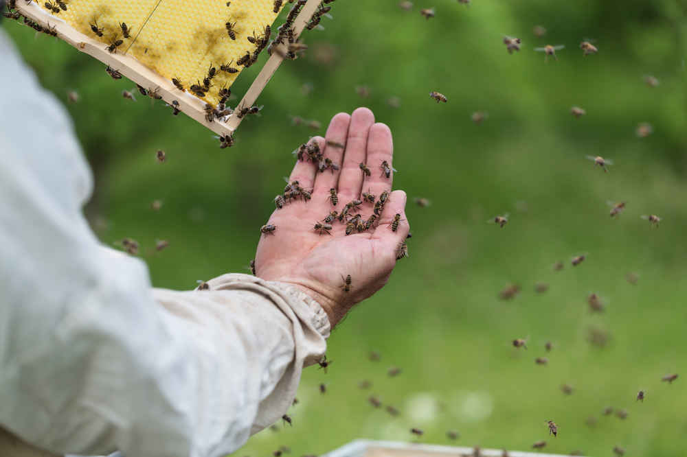 An Arizona Man Actually Registered Bees as Emotional Support Animals