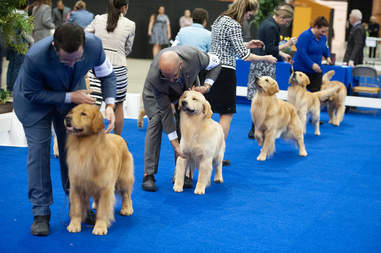 Golden Gate Kennel Dog Show
