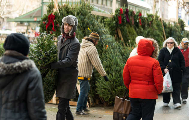 The Best Time to Buy a Christmas Tree in NYC Is Right Now