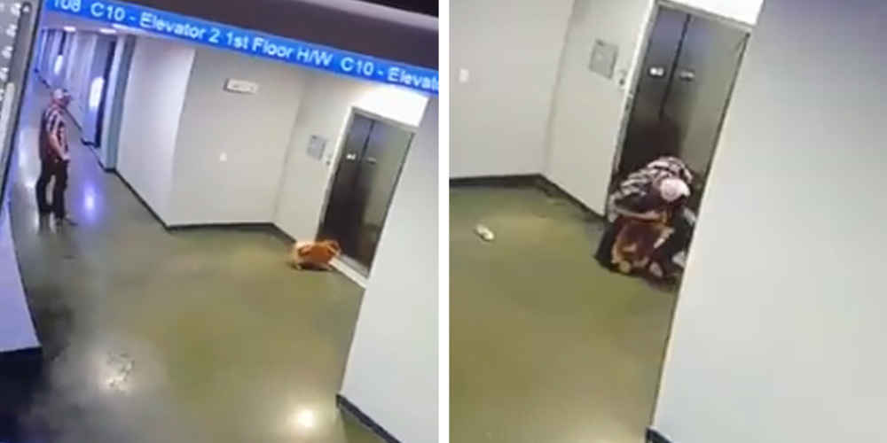 Video Shows Guy Rushing To Save Dog Whose Leash Got Trapped In Elevator