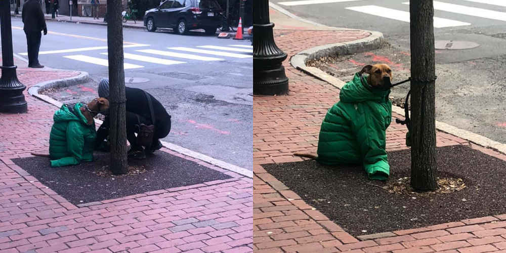 Woman Gives Dog Her Own Jacket So He Stays Cozy Waiting Outside