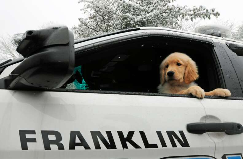 Therapy dog Ben Franklin with the Franklin Police Department