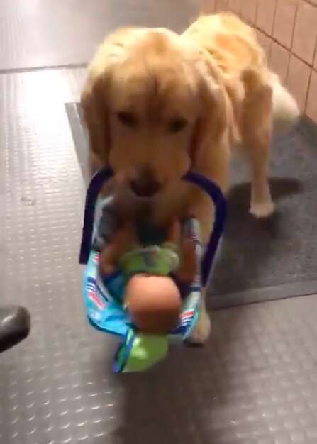 Therapy dog steals Christmas toys