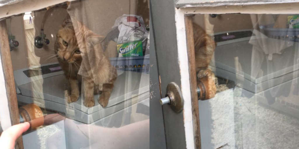Clever Cat Lets Mom Back Inside House After She Locks Herself Out
