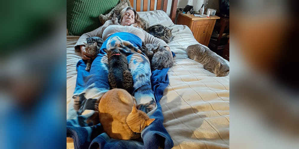 Cats Cuddle With Mom To Help Her Feel Better After Surgery