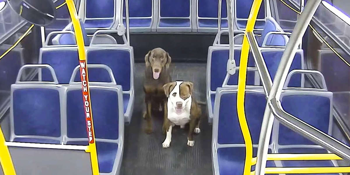 Bus Driver Helps Two Lost Dogs Make It Home For Christmas