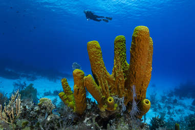 Cayman Brac island