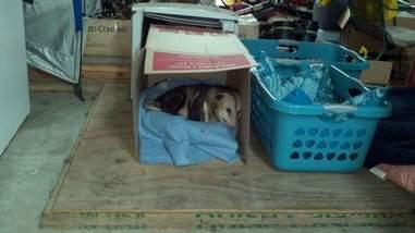 Possum sleeps in a garage