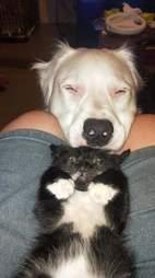 dog comforts kitten