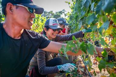 doffo winery