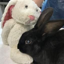 blind rabbit