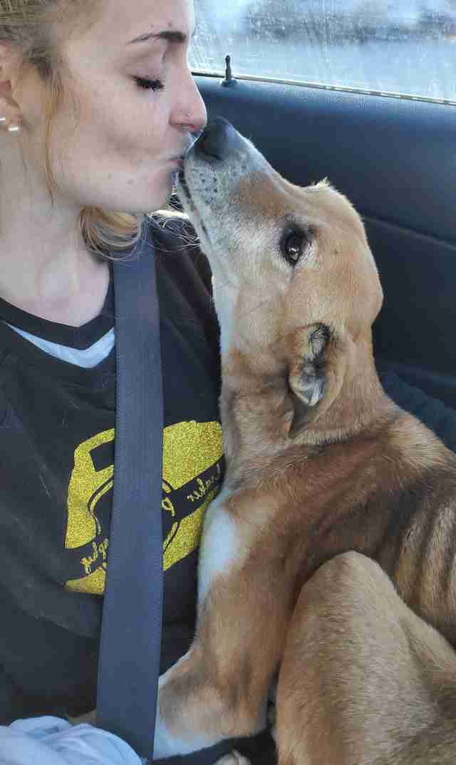 Reba the stray dog gives her rescuer kisses