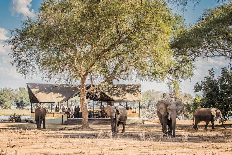 Chiawa Safaris in Zambia