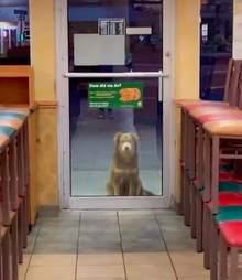 Stray dog waits at Subway for a meal