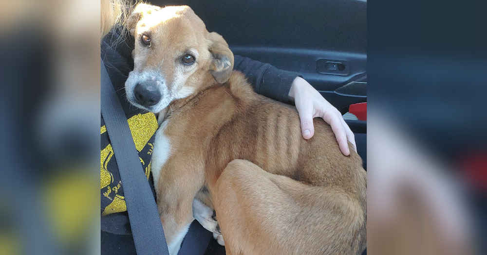 Dog Found On Side Of Road Immediately Snuggles Her Rescuer