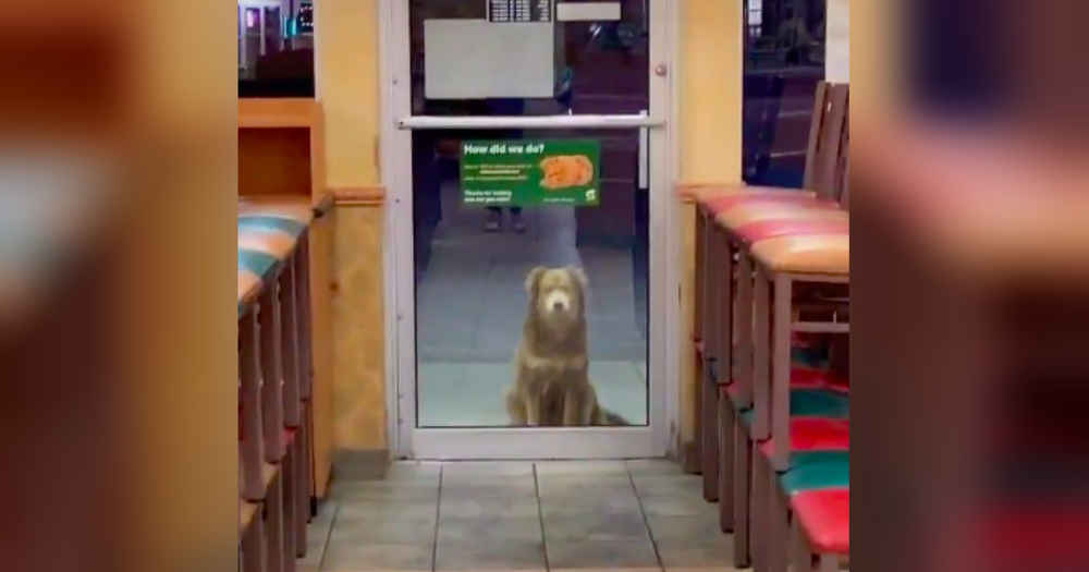Stray Dog Visits Sandwich Shop Every Day For A Free Meal