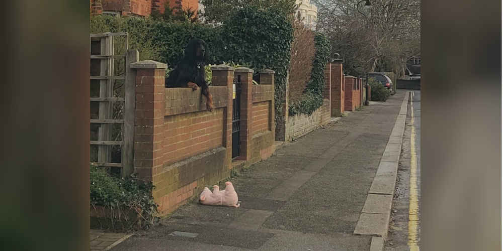 Woman Stops Her Car To Help Dog Who Dropped His Stuffed Pig