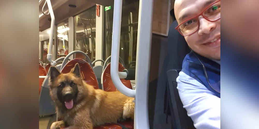 Bus Driver Is Surprised After Friendly Dog Hops Aboard All Alone