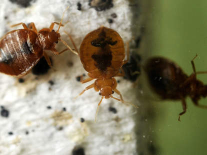 Bed Bug Infested Cities in America