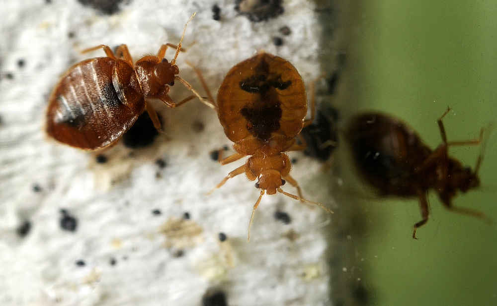 These Are the Most Bed Bug-Infested Cities in the US