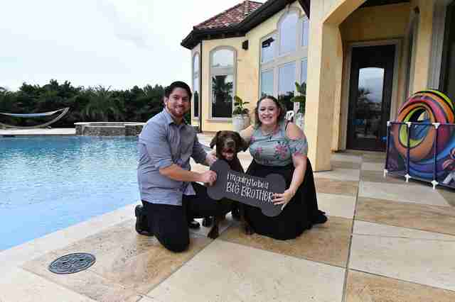 Couple has a puppy gender reveal